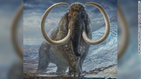 Les mammouths étaient les premiers conducteurs de camions sur route glacée,'  Parcourir de grandes distances à travers le pôle Nord
