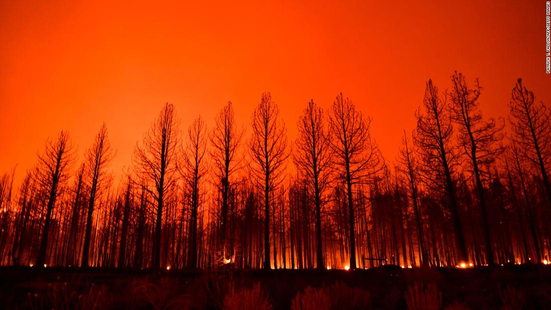 Northern Hemisphere's summer of wildfires let off record-breaking carbon emissions