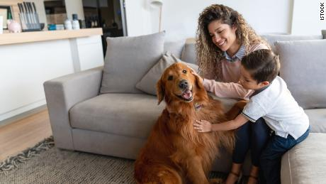 Does your pet have separation anxiety? Here's how to help, according to vets