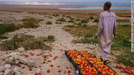A tomato farmer looks off towards an area where the Dead Sea has receded in Ghor Haditha, Jordan, on April 10, 2021.