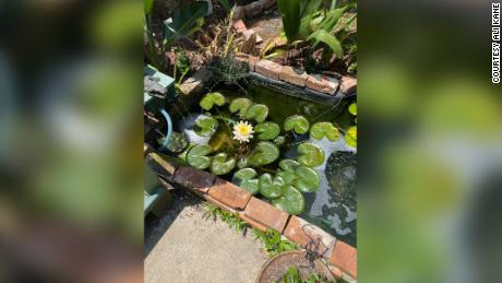 The koi pond in Alexandra's yard.
