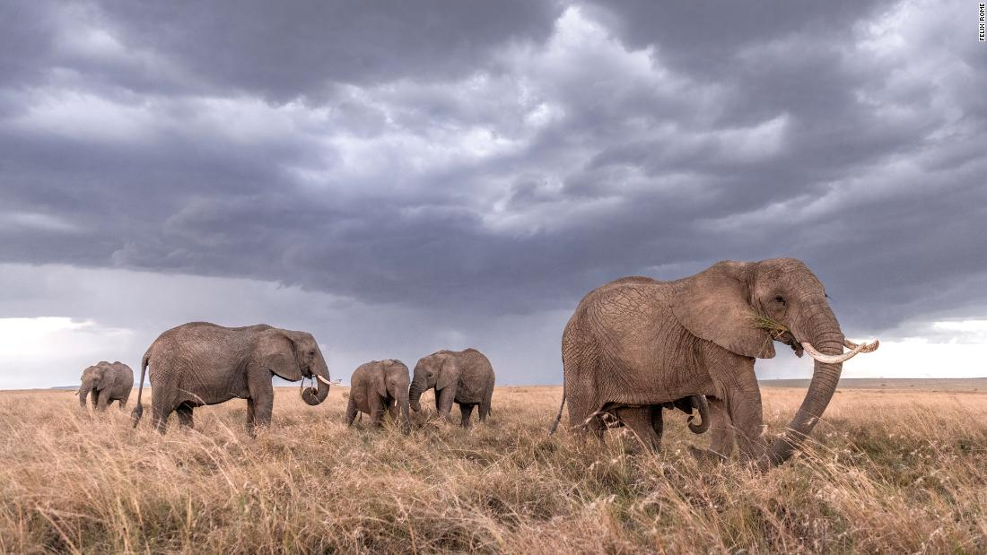 'I felt like I was the only tourist in Kenya': How photographer Felix Rome got the wildlife pictures of a lifetime