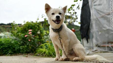 Baekgu le chien a sauvé une femme de 90 ans après qu'elle s'est effondrée dans une rizière à Hongseong, en Corée du Sud.
