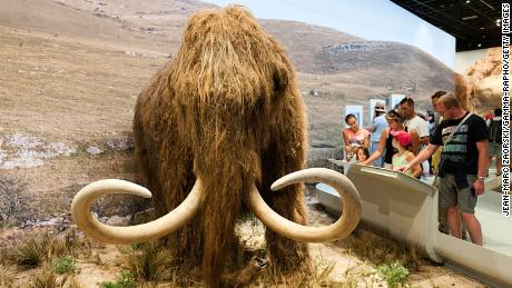 Scientists want to resuscitate the woolly mammoth.  They just got $ 15 million to make it happen