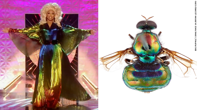 RuPaul has a new namesake — and it's a fabulous, rainbow-colored fly