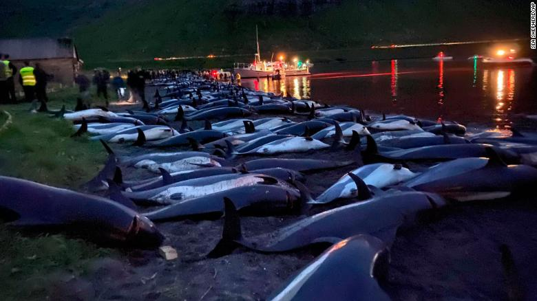 More than 1,400 dolphins were killed in the hunt.