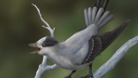 Ini adalah ilustrasi bagaimana burung purba menjadi hidup.