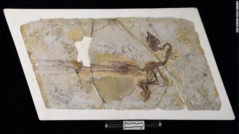 Fossil reveals bird with long, flashy tail feathers that lived 120 million years ago