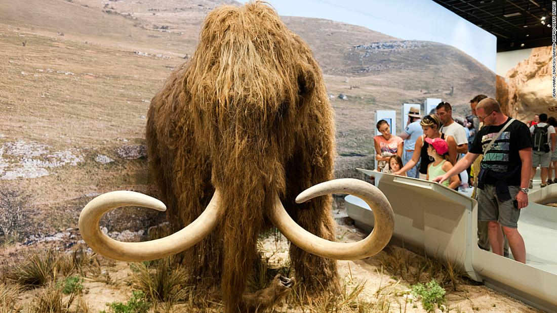 Woolly mammoth resurrection project receives $15 million boost - CNN