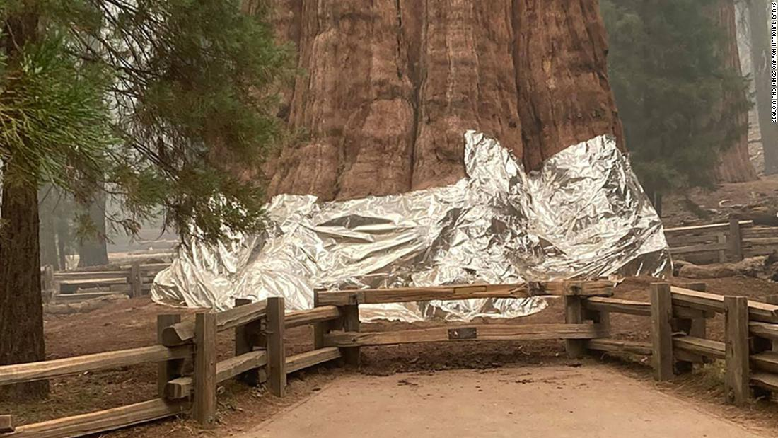 Officials wrapped the world's largest tree in protective foil to guard it against California wildfires
