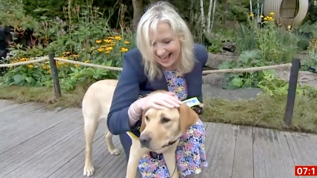 Reporter jokes after dog causes face-plant: 'She's a very strong girl'