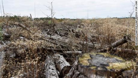 睡美人森林正在消亡。 这不是下一任德国总理面临的唯一气候危机