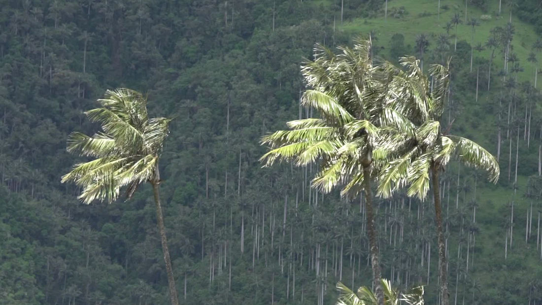 These unique trees transform landscapes and livelihoods