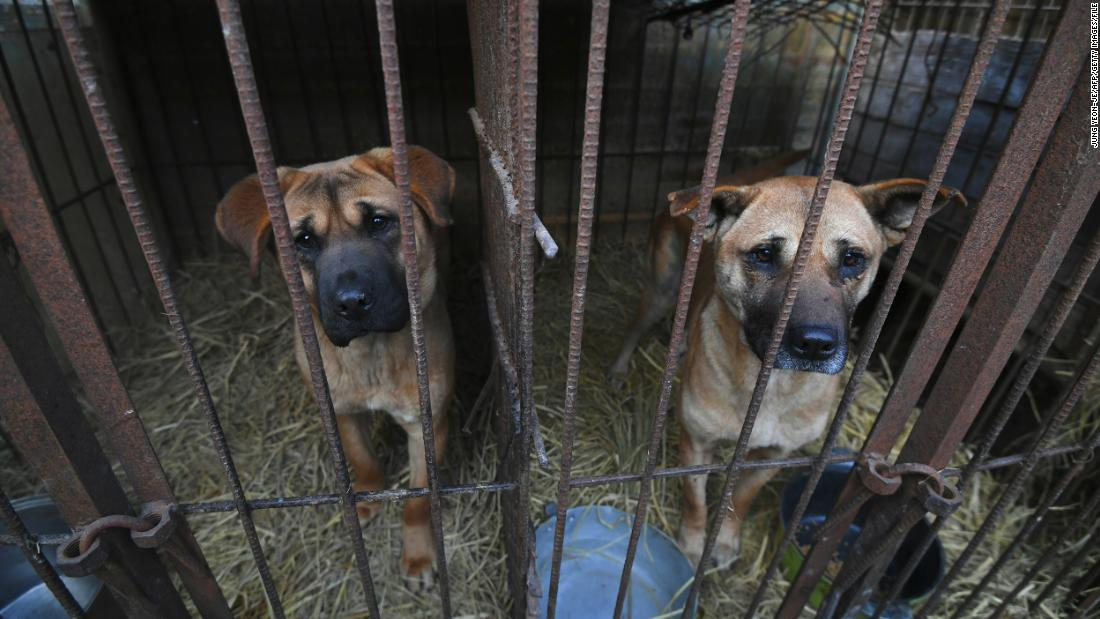 South Korea's President Moon says it's time to consider a ban on eating dog meat