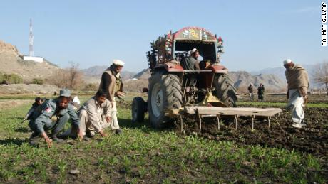 A tractor eradicates opium poppies in Nangarhar province in January 2007.