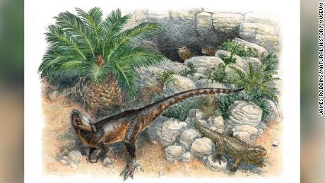Een reconstructie van een nieuwe dinosaurussoort door een kunstenaar.  Illustratie door James Robbins