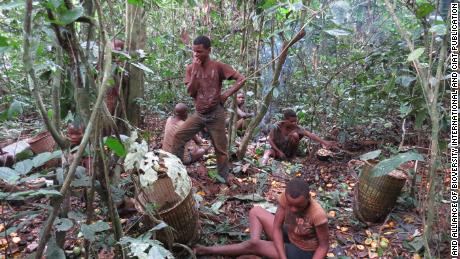 The Baka people, typically hunter-gatherers, forage for mushrooms in the forest.