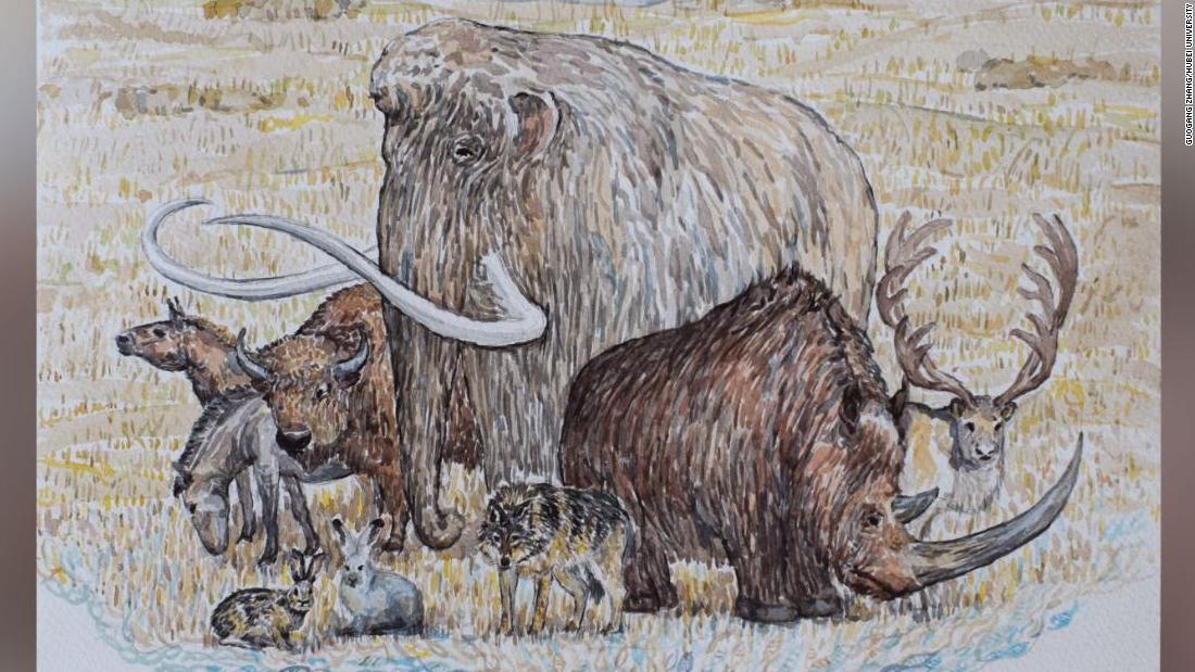 Mammoths and other extinct Ice Age giants clung on longer than previously thought, DNA analysis suggests