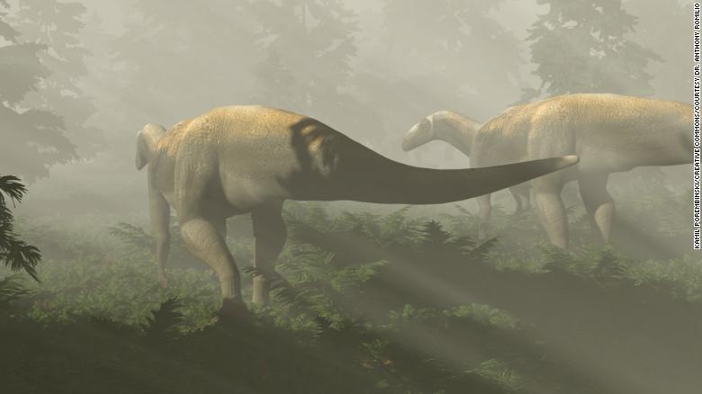 Dinosaur fossil from a supposed huge carnivore actually belongs to something else