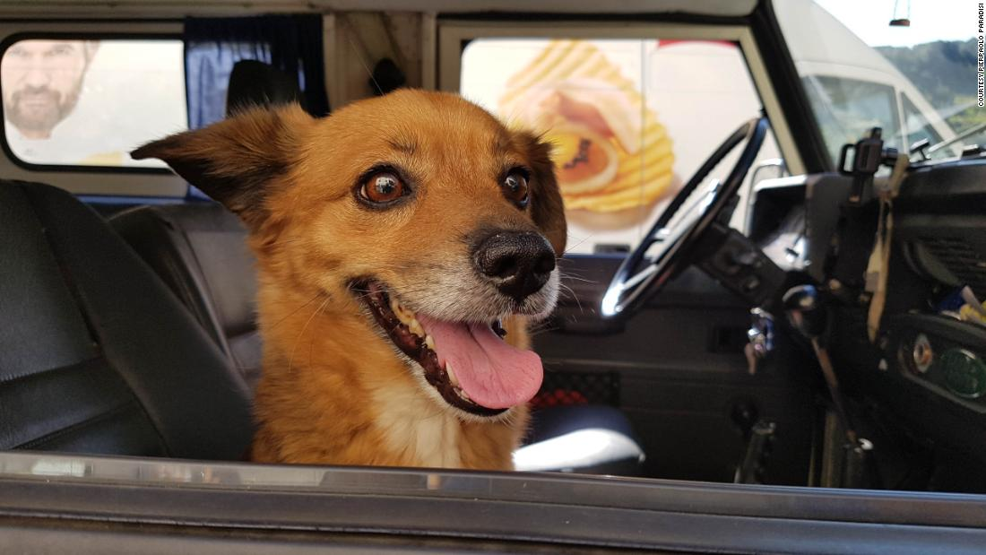 The hotel dog that saved its owner's life