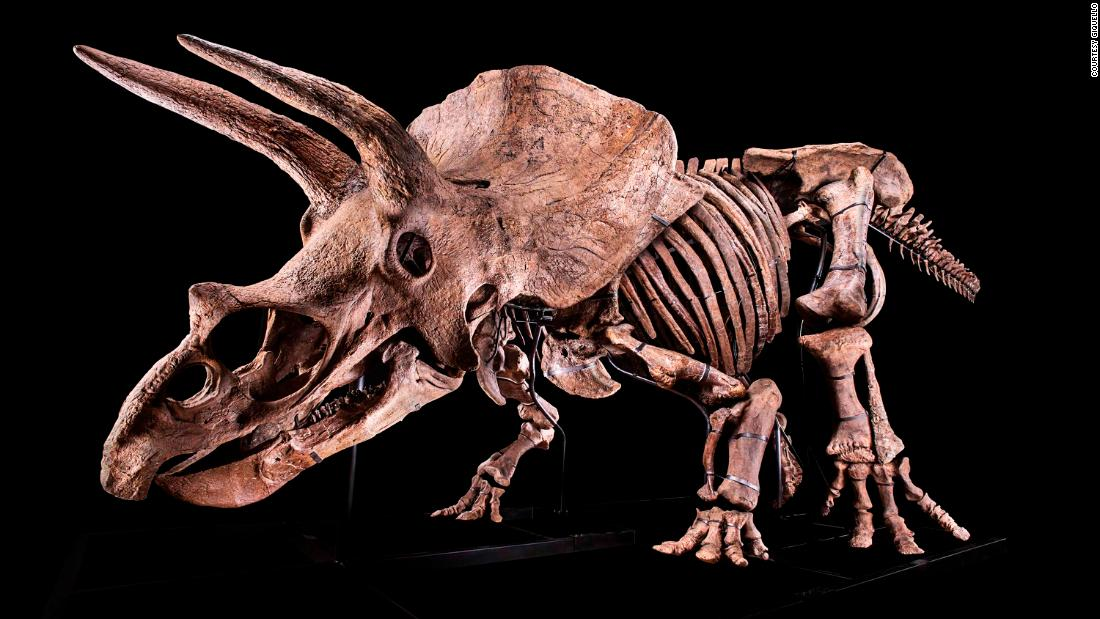 'Big John,' the world's largest Triceratops ever found, sells for $7.7 million