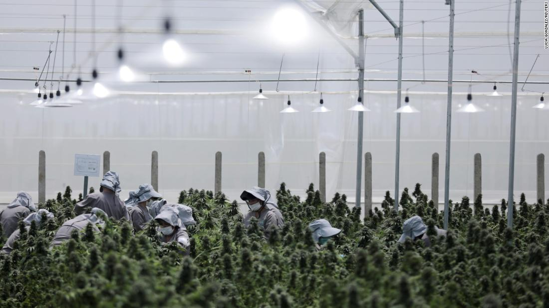 With export restrictions eased, Colombia's medical cannabis business is poised for liftoff