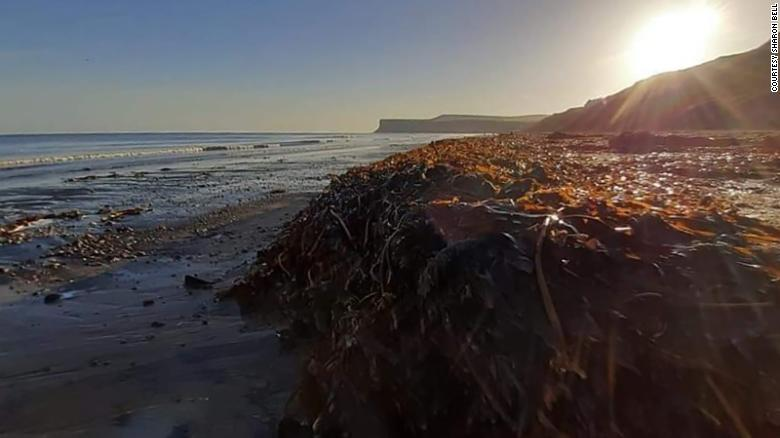 Thousands of dead sea creatures are washing up on English beaches
