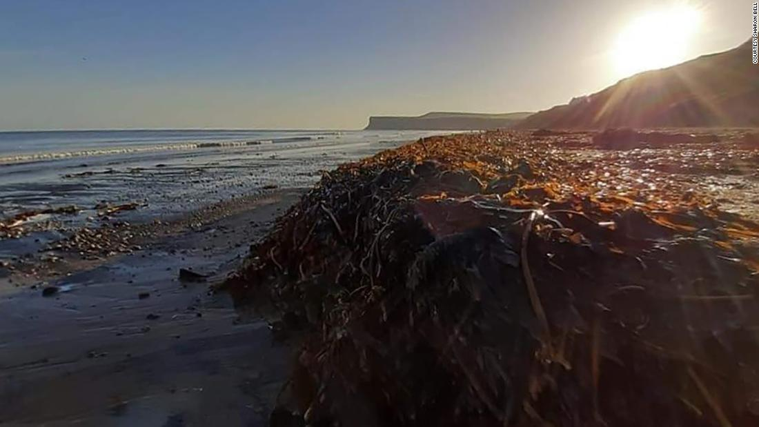 Thousands of dead sea creatures are washing up on UK beaches